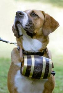 20090720_St_Bernard_w_barrel_250